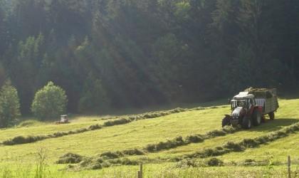 Boerencampings Oostenrijk - Foto: Sanne Roemen (Flickr)